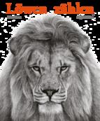 Löwen zählen